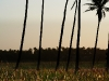 tofo-beach-palms_img_4235